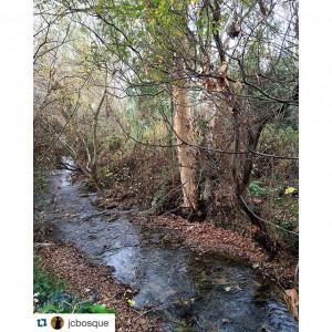 rio majaceite el bosque