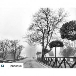 el bosque cadiz niebla