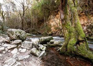 senderismo el bosque benamahoma