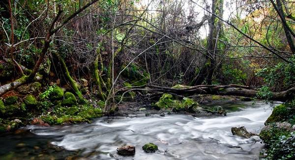 rio el bosque cadiz