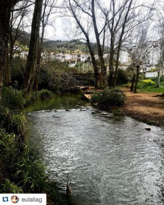fotos el bosque cadiz