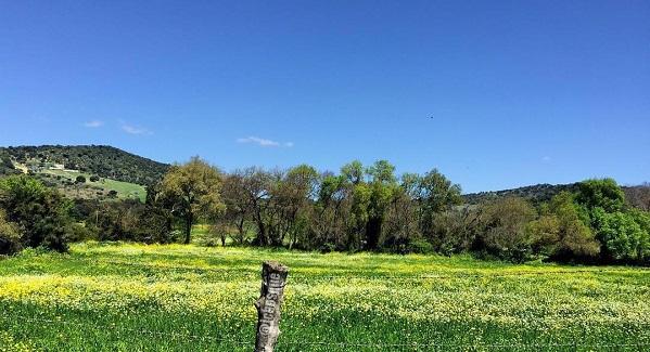 Primavera en El Bosque (Cádiz)